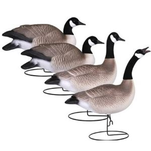 Field-Series FB Canada Goose Active 4 Pack